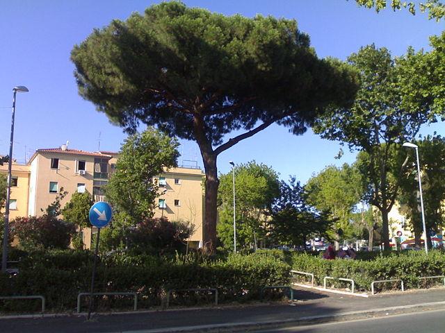 Foto del quartiere Acilia a Roma
