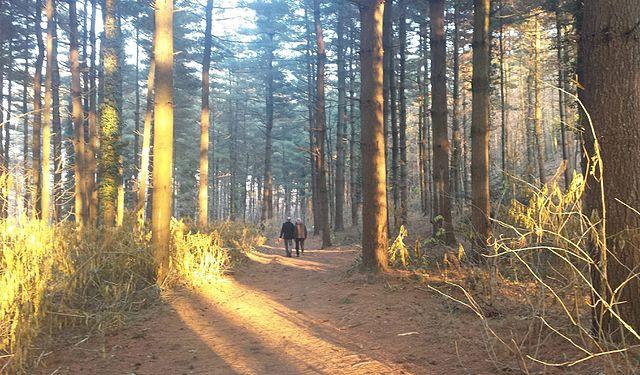 Foto del bosco tra Cadorago e Lomazzo in provincia di Como